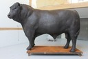 Bronze Hereford bull sculpture