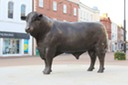 Bronze Bull in Hereford City