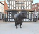 bronze bull in High Town Hereford